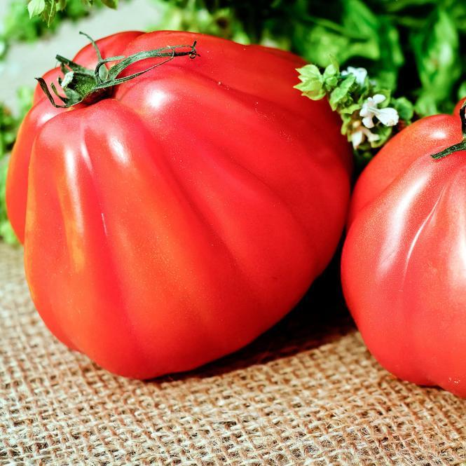 Tomatenpflanze Corazon, veredelt, im ca. 12 cm-Topf