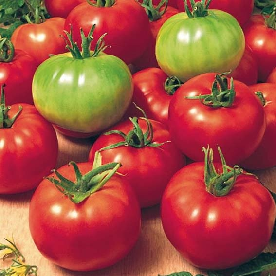 saatgut gemuesesamen tomaten b2b trade. Black Bedroom Furniture Sets. Home Design Ideas