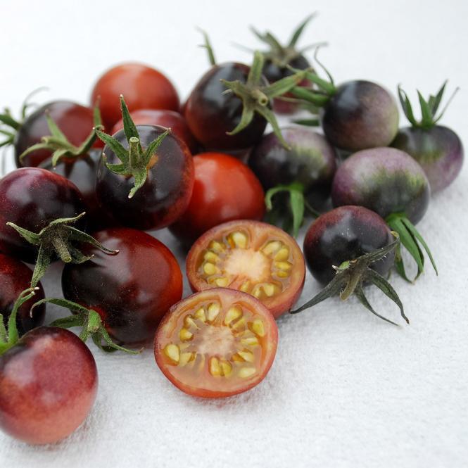 Tomatensamen Indigo Blue Berries