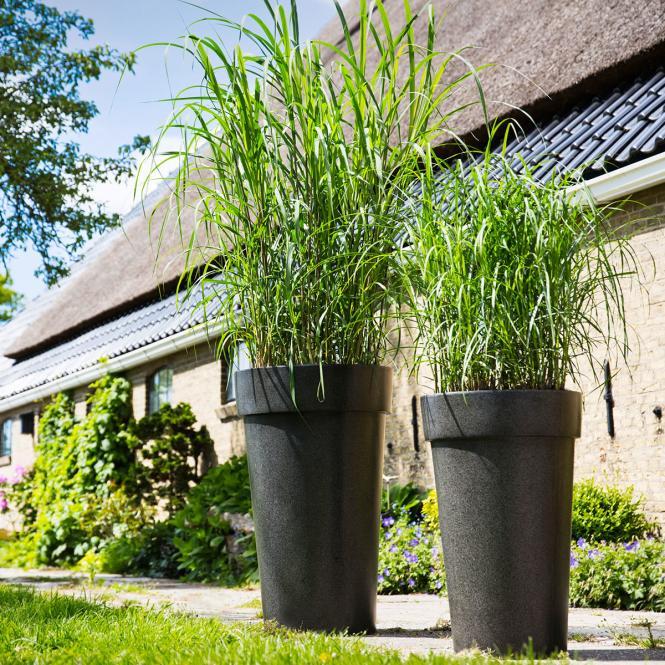 rabatt pflanzen containerpflanzen. Black Bedroom Furniture Sets. Home Design Ideas