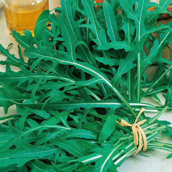 Saatscheiben Rucola Bologna, 10 Zentimeter Durchmesser