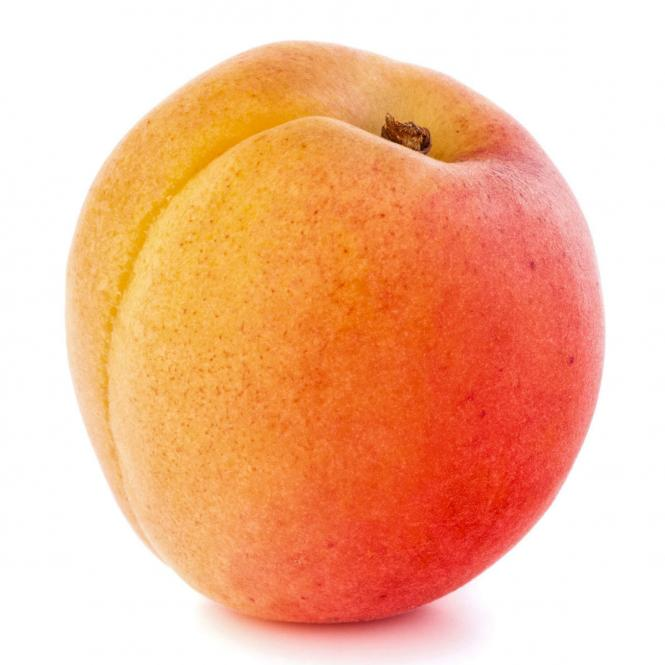 Aprikose Orange Beauty, im ca. 23 cm-Topf