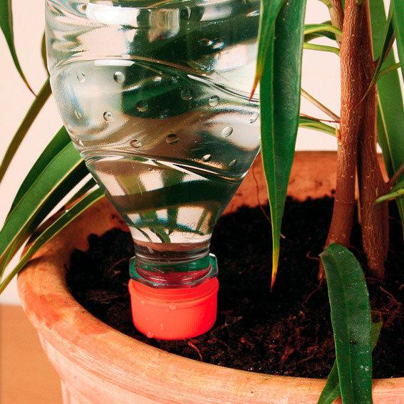 Bewässerungsflasche