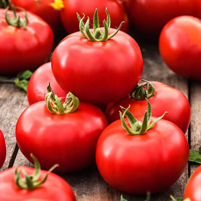 Tomatenpflanze Vitella, veredelt, im ca. 11 cm-Topf