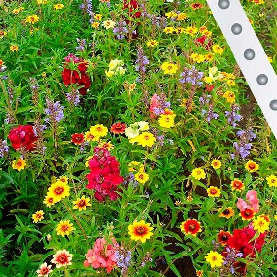 Saatband 15 m Blühende Schneckenbarriere