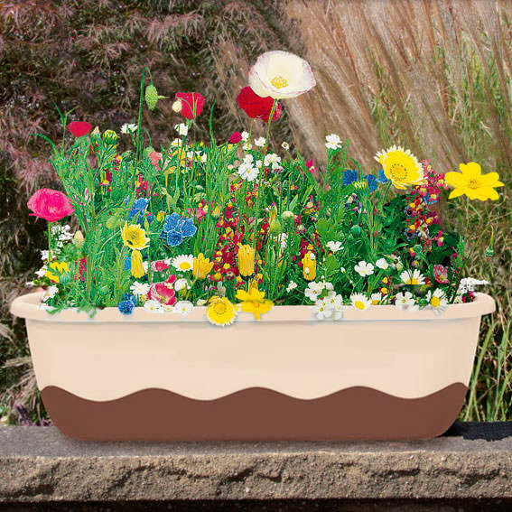 Saatplatte 38 x 17 Zentimeter Mini-Blumenwiese Multicolor
