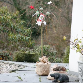 Vogelfutterbaum, im ca. 23 cm-Topf | #10