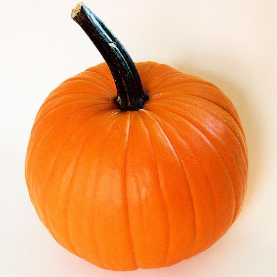 Kürbissamen Halloween- und Speisekürbis Neon F1 | #2