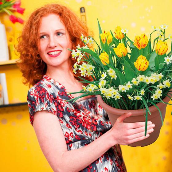 Pflanz-Tray Ready to Plant Tulpen und Narzissen | #2