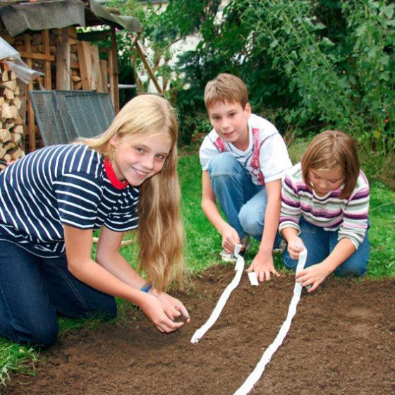 Saatband-Set Garten-Möhren | #2