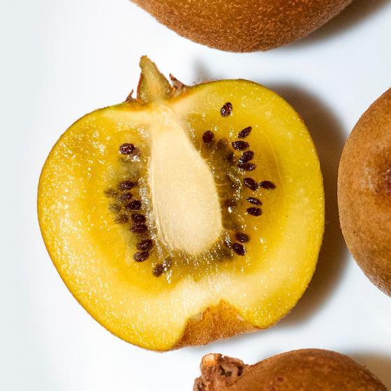 Gelbe Kiwi Minkigold | #2