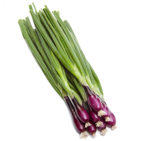 Gemüsesamen-Sortiment Bunte Bundzwiebeln | #2
