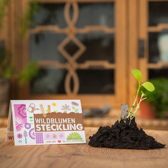 Steckling Wildblumensamen, 10 Stück | #2