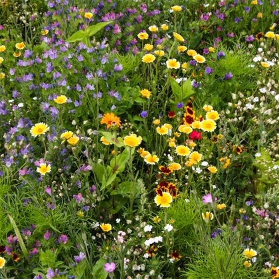 Blumen-Seedbombs Bienenschmaus | #2