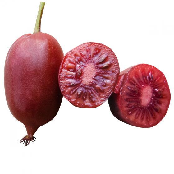 Kirsch-Kiwi Cherrybomb | #2