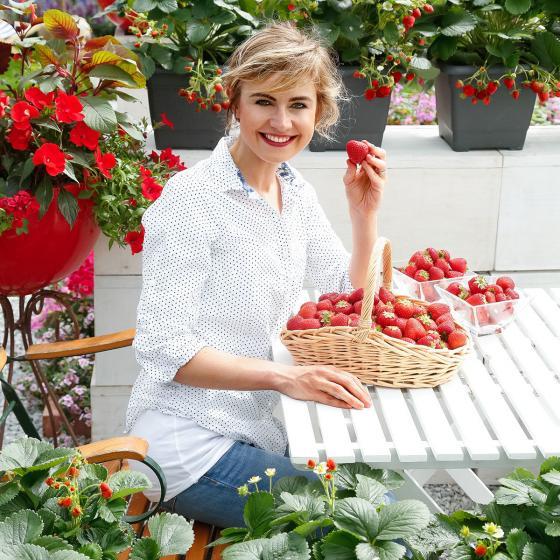 Erdbeerpflanze Duft-Erdbeere Delizz® | #2