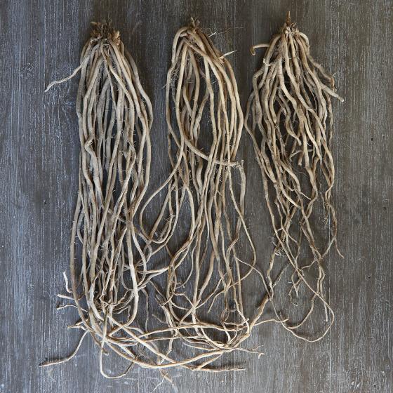 Gemüsepflanzen-Sortiment Steiners Bunter Spargel | #2