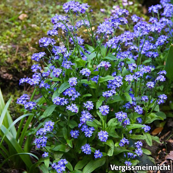 Seedball Blumenwiese in Himmelblau, 20 Seedballs | #2
