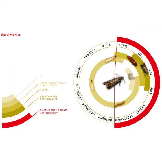 nemapom Nematoden zur Apfelwickler-Bekämpfung, 10 Mio. | #2