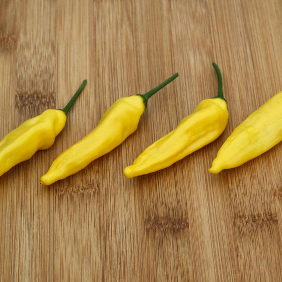 Paprikapflanze Zitronen-Chili | #2