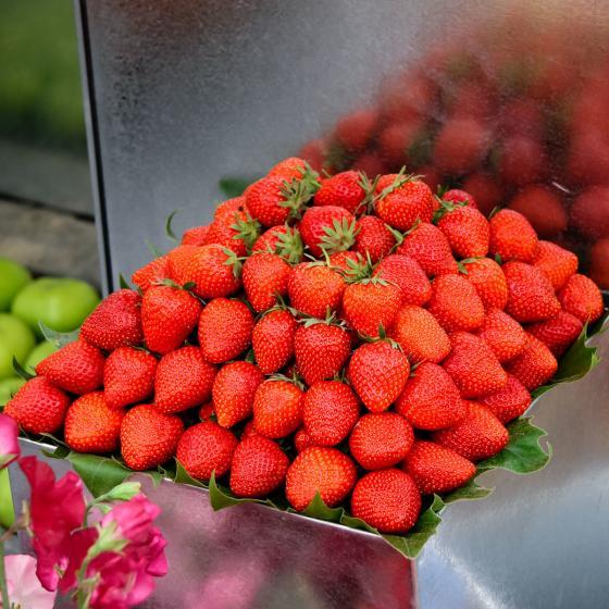 Erdbeere Praline 12er-Set, im ca. 7 cm-Topf | #2