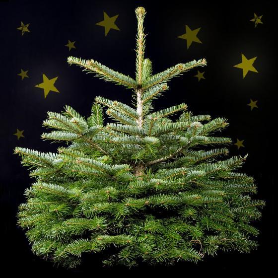 Weihnachtsbaum Nordmanntanne 60-80 cm mit Holzkreuz-Ständer | #2