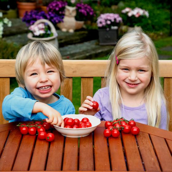 Mini-Jungpflanze Tomate Sweet Aperitif | #2