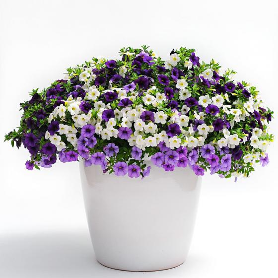 Zauberglöckchen Trixi® Shades of Blue - Blumenampel | #2