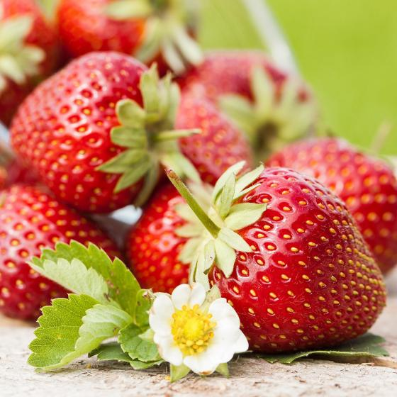 Erdbeer-Ampel, im ca. 27 cm-Ampeltopf | #2