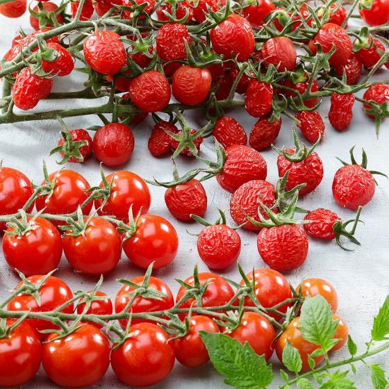 Tomatenpflanze Tutti Frutti Sugar Plum Raisin F1, veredelt, im ca. 10,5 cm-Topf | #2