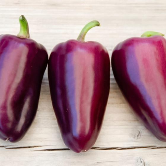 Paprikasamen Snacking Purple F1 | #2