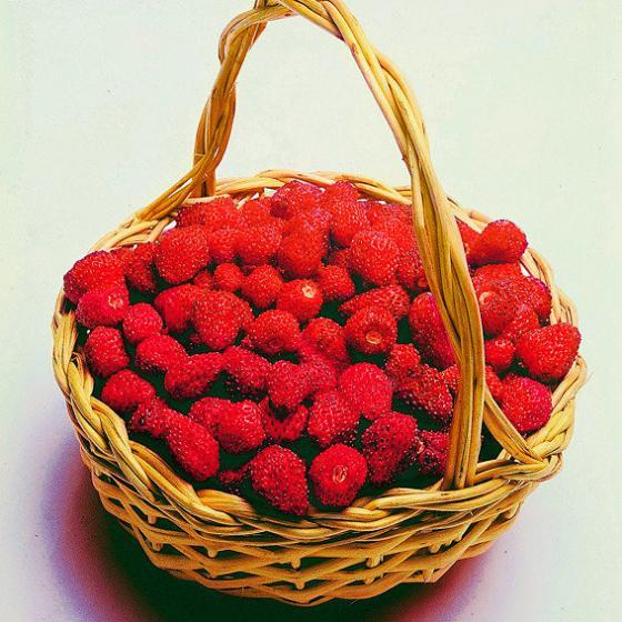 Wald-Erdbeerensamen Mignonette | #2