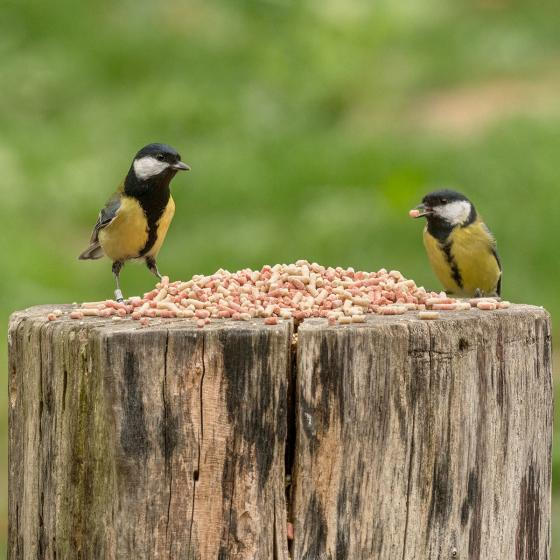Vogelfutter-Fettpellets, 1 kg | #2