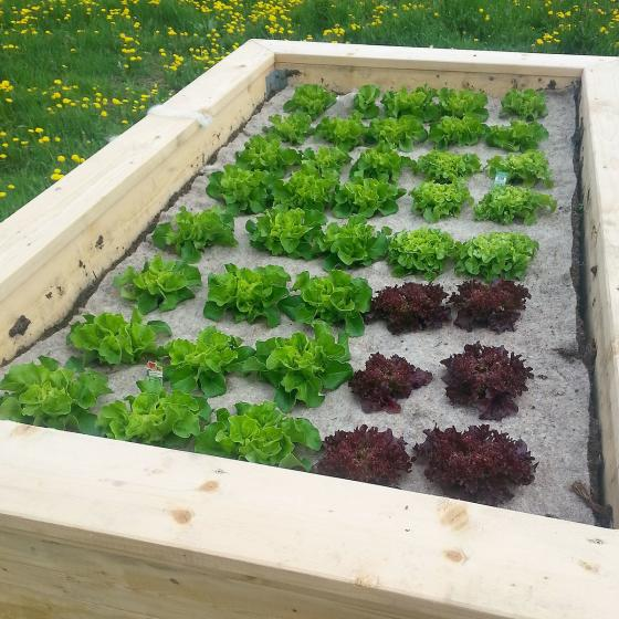 Unkrautschutzmatte für Gemüsebeete aus Schafwolle | #2
