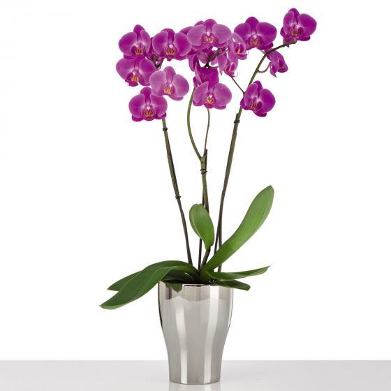 Keramik-Orchideengefäß, rund, 17,3x13,6x13,6 cm, silber | #2