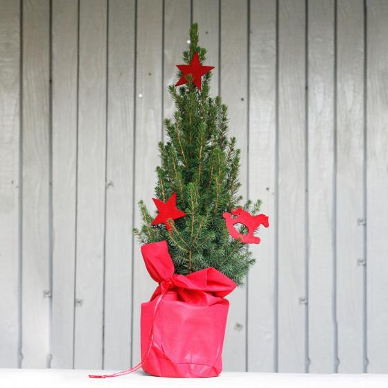 Geschmückte Zuckerhutfichte in weihnachtlicher Husse, groß | #2
