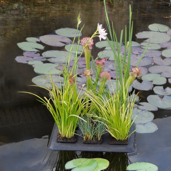 Velda treibende Teich-Pflanzoase, 30 x 40 cm | #2