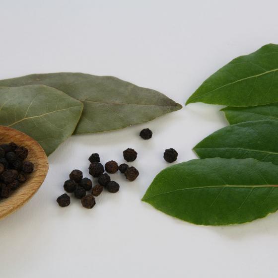 BIO Kräuterpflanze Gewürz-Lorbeer, im ca. 12 cm-Topf | #2