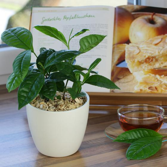 Blu Bio Echte Tee-Pflanze | #2