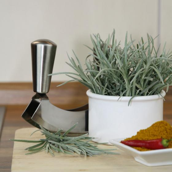 BIO Kräuterpflanze Currykraut, im ca. 12 cm-Topf | #2