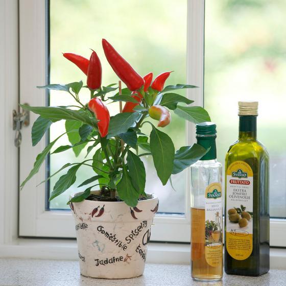 Blu Bio-Gemüsepflanze Snack Chili | #2