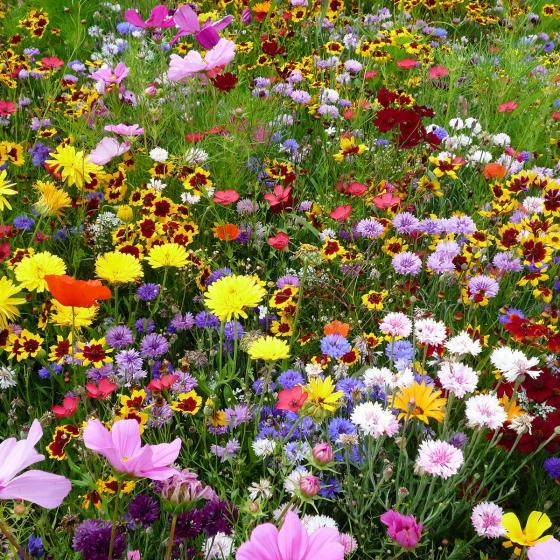 Blumen-Wiesensamen, 250 g | #2