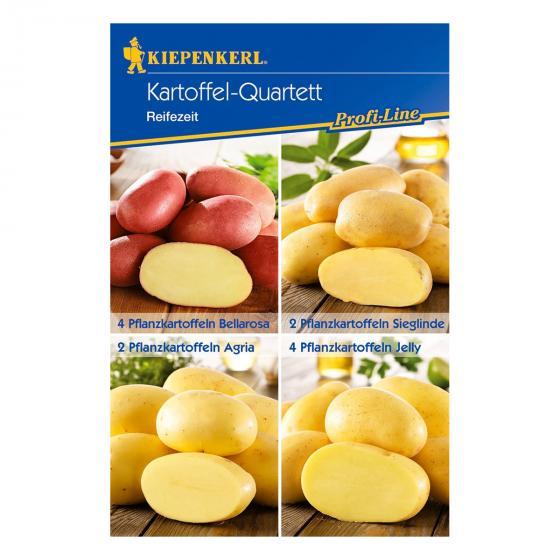 Kartoffel-Quartett Reifezeit-Spezialitäten, 12 Stück | #2