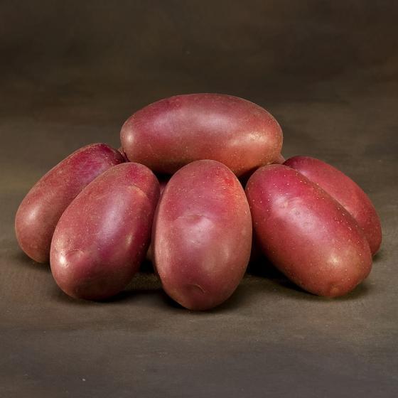 Kartoffel LunaRossa 5 kg | #2