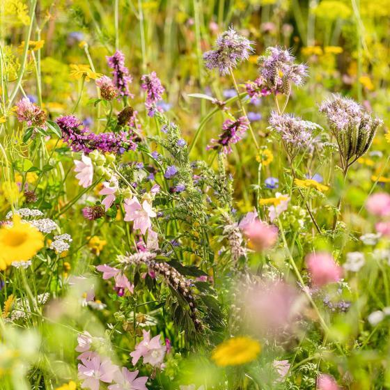 Wildgärtner Freude Bienengarten, 50 g | #2