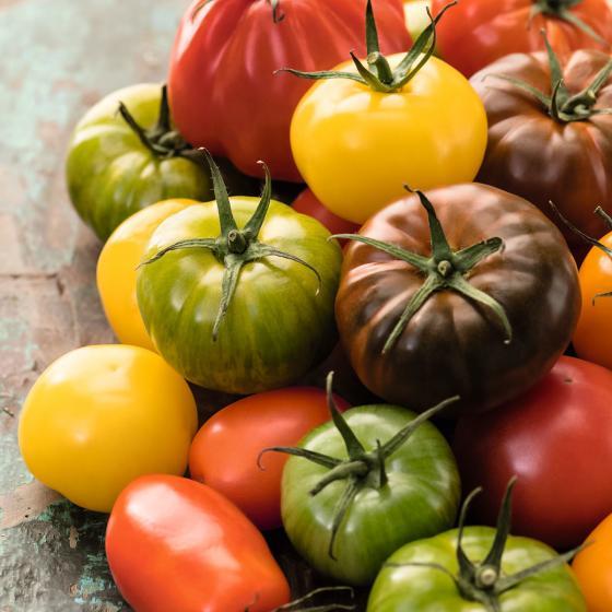 Sortiment Bunte Stab-Tomatenpflanzen, veredelt, 5 Stück | #2