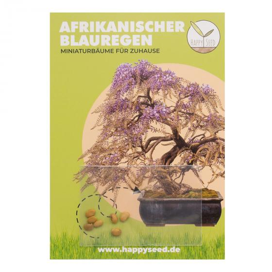 Bonsai Samen Afrikanischer Blauregen | #2