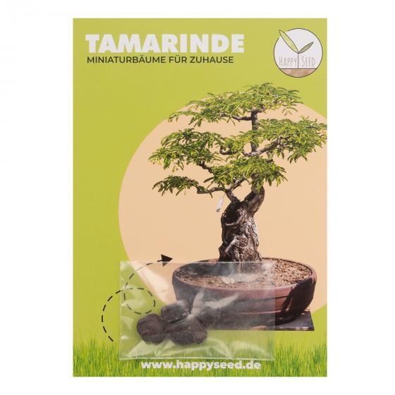 Bonsai Samen Tamarinde | #2