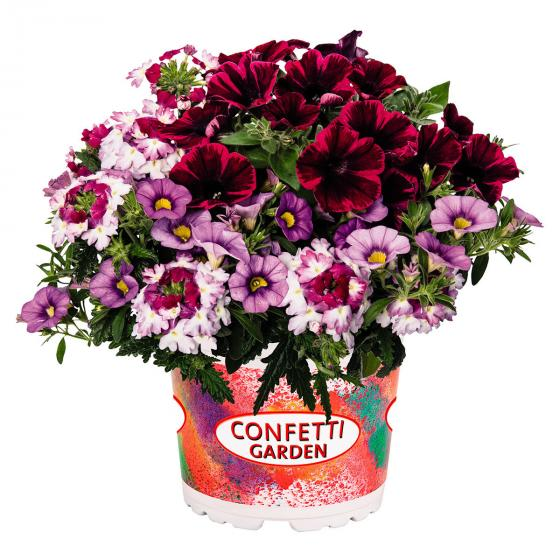 Confetti Shocking Hot Pink | #2