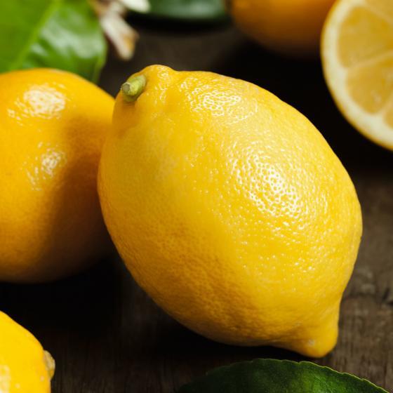 Zitronen-Stamm, im ca. 17 cm-Topf | #2
